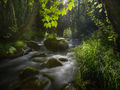 Sunlight filtered by the leaves of maple trees on a stream - PhotoDune Item for Sale