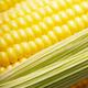 Ripe fresh organic sweet corncob with leaf closeup background - PhotoDune Item for Sale