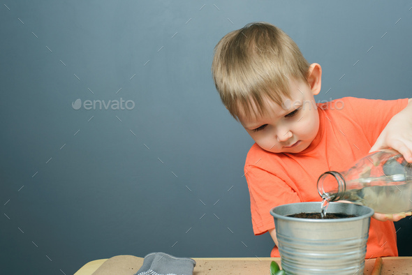 caucasian blond child boy watering ground for planting money tree plant in metal flower pot - Stock Photo - Images