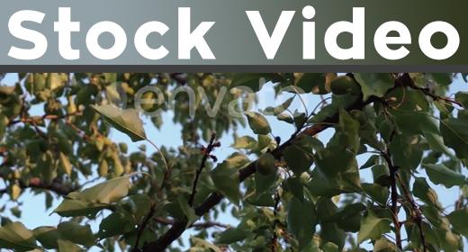 Stock Video