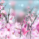 Spring Blossom Pink - VideoHive Item for Sale