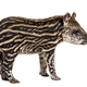 Brazilian tapir standing in front of white background - PhotoDune Item for Sale
