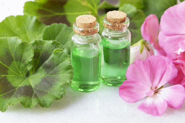 Plant Extract and Geraniums - Stock Photo - Images