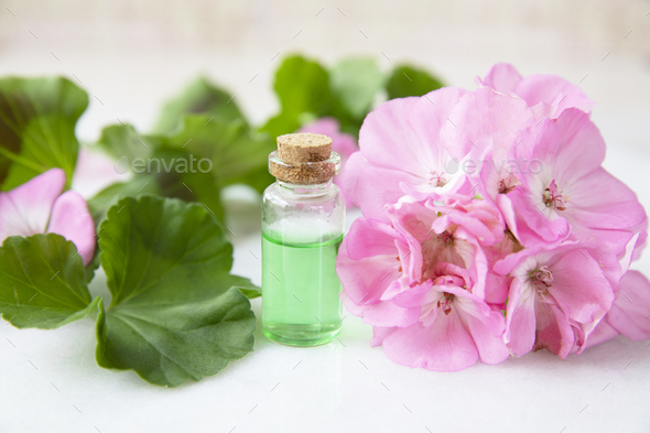Geranium Plant Extract - Stock Photo - Images