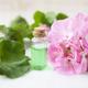Geranium Plant Extract - PhotoDune Item for Sale