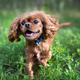 Happy dog running - PhotoDune Item for Sale