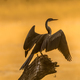 An african darter against the glare of sunrise - PhotoDune Item for Sale