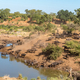 Elephants and Cape buffaloes at a waterhole - PhotoDune Item for Sale