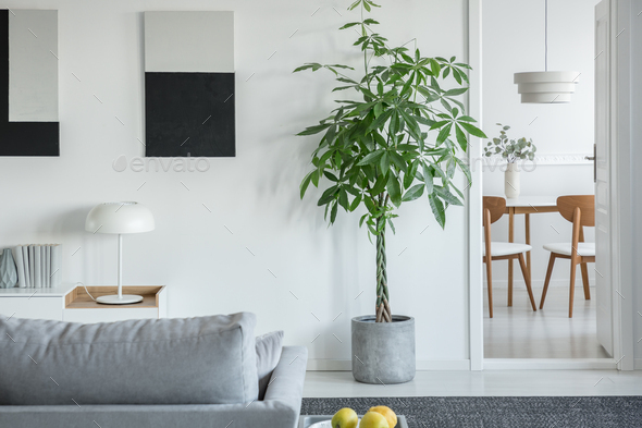 White lamp on table in bright living room interior with plants and grey  comfortable sofa