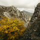 autumn colors in landscape with canyon cliffs - PhotoDune Item for Sale
