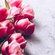 Tulips - PhotoDune Item for Sale