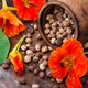 Seeds, and flowers of nasturtium - PhotoDune Item for Sale