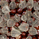 Dried fruits of the Cape Gooseberry and chestnuts - PhotoDune Item for Sale