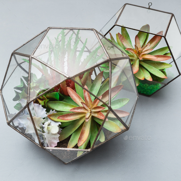 Mini garden in two glass geometric florariums - Stock Photo - Images