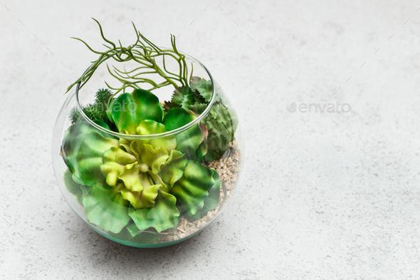 Mini succulent garden concept, top view, copy space - Stock Photo - Images