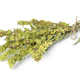 Bunch of dried green ironwort - PhotoDune Item for Sale