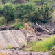 Lioness, Panthera leo, on the Gudzani dam wall - PhotoDune Item for Sale