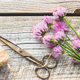 Chives with Flowers - PhotoDune Item for Sale