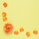 Background with coral rose and petals - PhotoDune Item for Sale