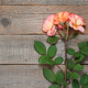 Coral roses on old wooden background top view - PhotoDune Item for Sale