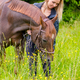 Caring woman feeding her arabian horse with snacks in the field - PhotoDune Item for Sale