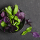 Fragrant Basil Herbs - PhotoDune Item for Sale