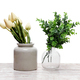 Plants in Vases - PhotoDune Item for Sale