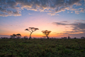 Savanna - PhotoDune Item for Sale