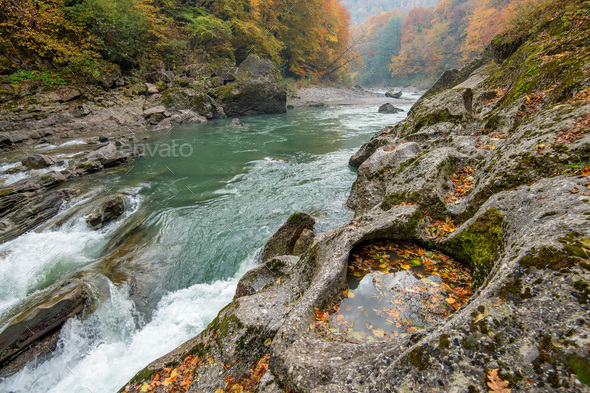 Landscape with mountain river and forest - Stock Photo - Images