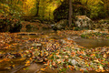 Autumn forest with creek - PhotoDune Item for Sale