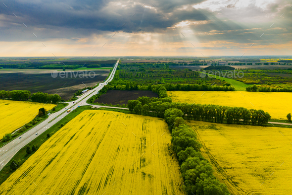Drone View of Yellow Rape Seed Fields - Stock Photo - Images