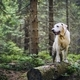 Happy dog in nature - PhotoDune Item for Sale