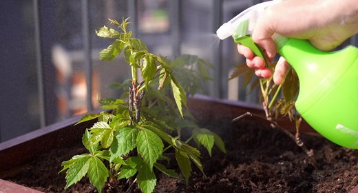 Gardening and Horticulture