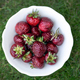 Fresh ogranic strawberries - PhotoDune Item for Sale