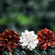 Christmas in Austria. Pine Cones Decorated with Red and White, Austrian Flag Colors - PhotoDune Item for Sale