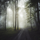 Road through enchanted mysterious forest with fog - PhotoDune Item for Sale