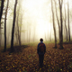 Man silhouette in mysterious forest with fog after rain - PhotoDune Item for Sale