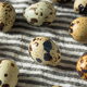 Raw Organic Spotted Quail Eggs - PhotoDune Item for Sale