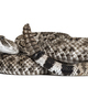 Crotalus atrox, western diamondback rattlesnake or Texas diamond-back, venomous snake - PhotoDune Item for Sale