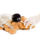 Soa, 4 months old, Crowned Sifaka, feeding from syringe against white background - PhotoDune Item for Sale