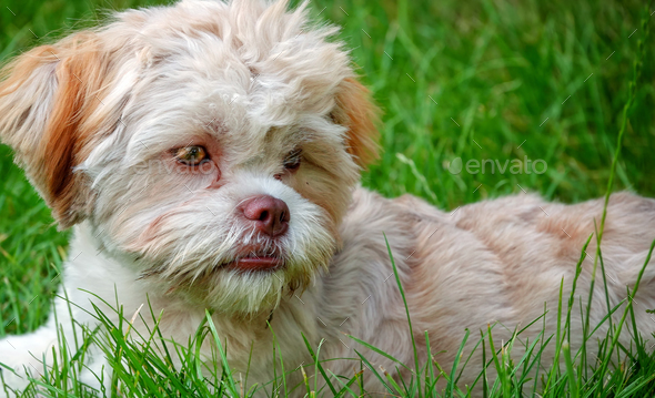 Sweet Dog in Green Nature  - Stock Photo - Images