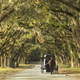 Carriage on Southern Plantation. - PhotoDune Item for Sale