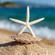 Starfish seashells on the sand by the sea on a sunny day - PhotoDune Item for Sale