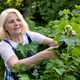 blonde woman cutting trimming branches doing garden work - PhotoDune Item for Sale