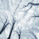 Frozen branches background - PhotoDune Item for Sale
