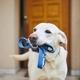 Dog waiting for walk - PhotoDune Item for Sale