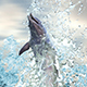 Dolphin In The Sea - VideoHive Item for Sale