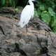 Bird - Nile River - Bujagali Falls + River in Uganda, Africa - PhotoDune Item for Sale