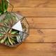 Composition of florarium vases, top view copy space - PhotoDune Item for Sale