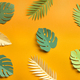 Summer yellow background with different leaves types - PhotoDune Item for Sale